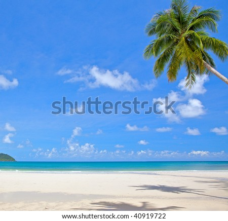 White sand beach, palm tree, sea water, tropical nature and sky background - stock photo