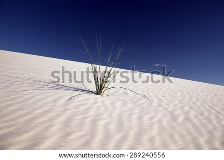 White Sands Desert in New Mexico, USA - stock photo