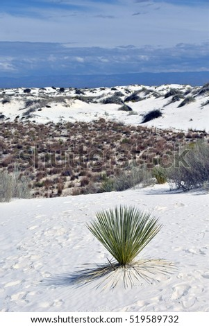 White Sands dunes and desert in New Mexico, USA Southwest
