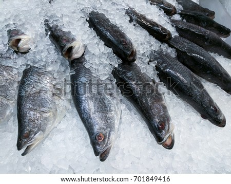 Crushed ice stock images royalty free images vectors for Bass fish cooking
