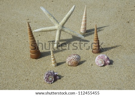 White sea star and shells standing upright in sand