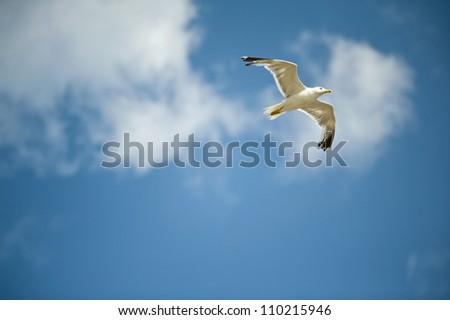 white seagull flying against the blue sky - stock photo