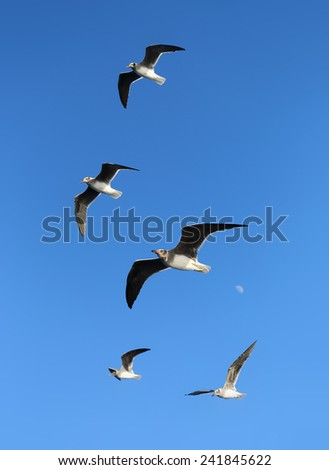 white seagull flying in the blue sky - stock photo