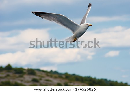 Information about North American Seagulls - SPWbooks