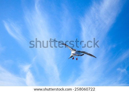 White seagull on blue cloudy sky background - stock photo