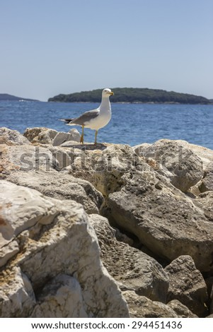 White seagull standing on a breakwater. Selective focus and shallow dof. - stock photo