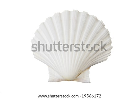 White shell isolated against white background