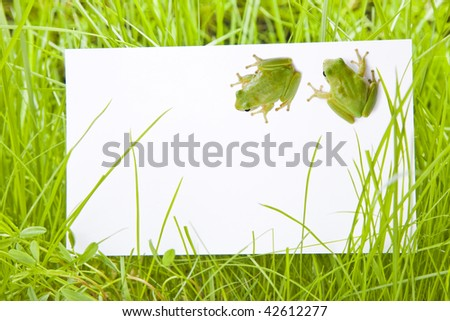 White Sign Amongst Grass with Two Tree Frogs - stock photo