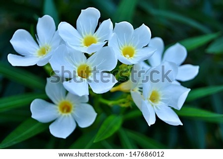 White small tropical flowers yellow center stock photo royalty free white small tropical flowers with the yellow center on an unsharp green background mightylinksfo Gallery