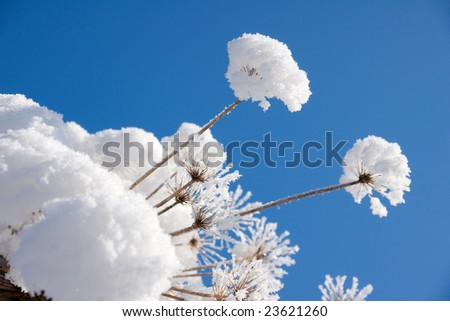 white snow caps of the dry brown grass on background of the blue sky