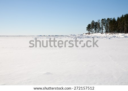white snow field of frozen sea bay and piece of coast with pine trees - stock photo