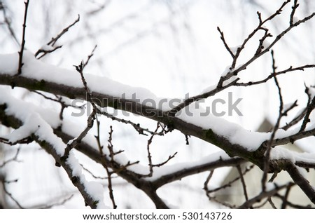 white snow on tree branches
