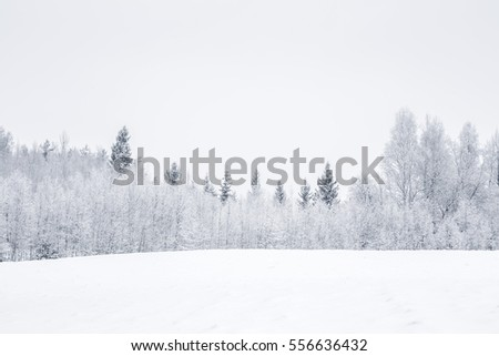 White snowy countryside forest. Tree branches and spruces are snow covered and look very beautiful.