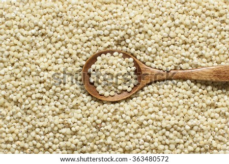 White Sorghum grain with a spoon close up