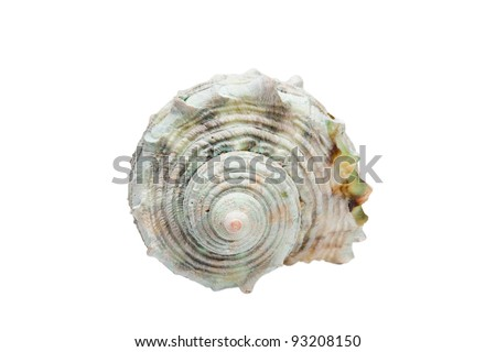 White spiral shell isolated on white background