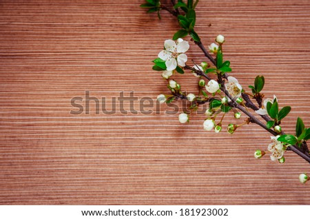 white spring blossoming flower background filtered retro effect - stock photo