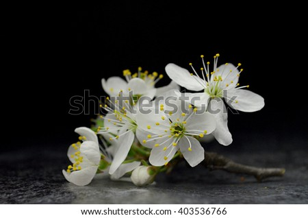 white spring flowers composition