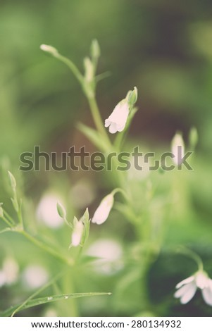 white spring flowers on green background with shallow depth of field - retro vintage film look