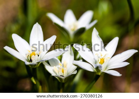 White spring flowers on green meadow - stock photo