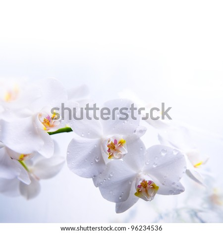 white spring orchid flower on the water - stock photo