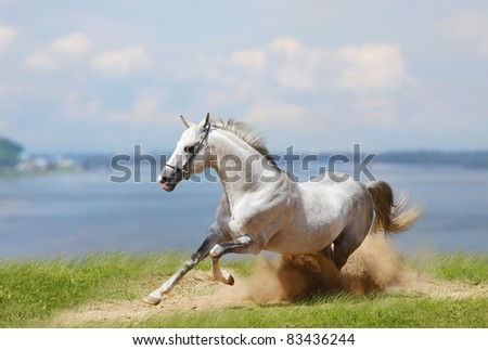 white stallion and water