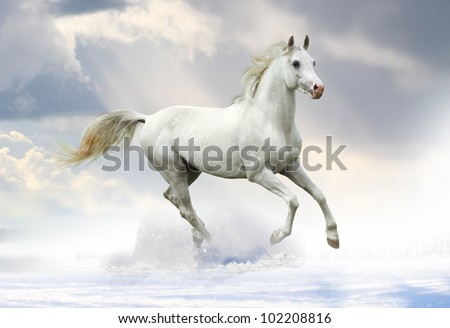 white stallion in snow - stock photo
