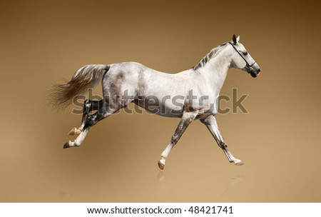 white stallion over a brown