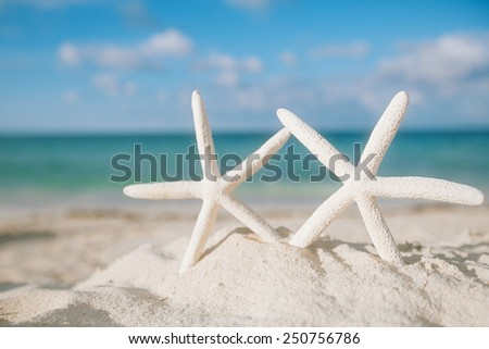 white starfish on white sand beach, with ocean sky and seascape, shallow dof - stock photo