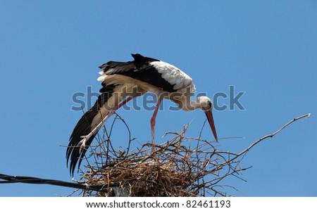 white stork on the nest - stock photo