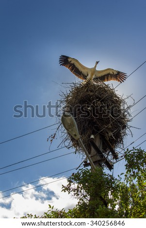White Stork standing on the nest, blue sky and white clouds in the background - stock photo