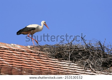 White stork with the nest on the house roof - stock photo