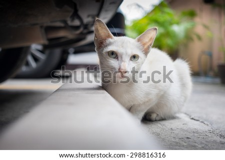 White stray cat sitting behind a car in the car park - stock photo