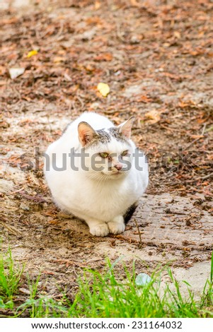 White stray cat with black spots and incredible green eyes - stock photo