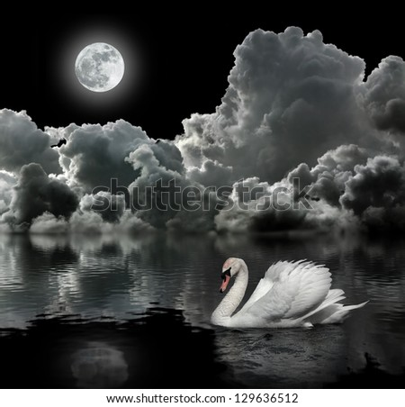 White swan at night under the moon - stock photo