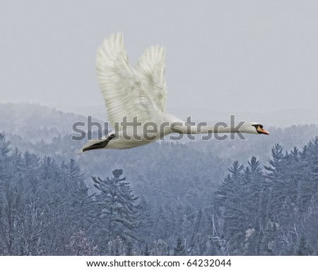 White swan flying over mountains - stock photo