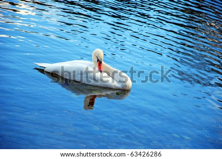 White swan on blue water with reflection - stock photo