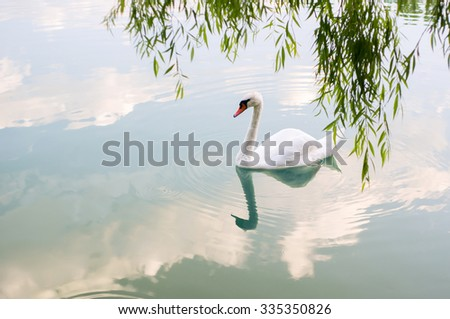 White Swan reflected in the water - stock photo