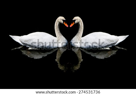 White swans in love sign . - stock photo
