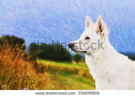 White Swiss Shepherd portrait old style structure - stock photo