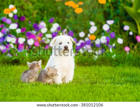 White Swiss Shepherd`s puppy sitting on green grass with two kittens - stock photo