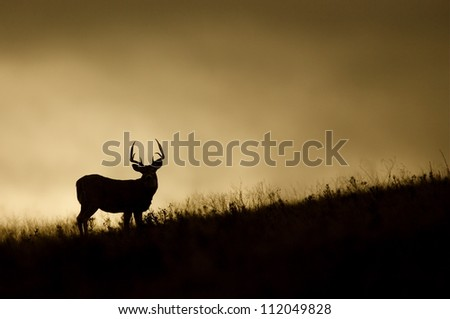 White-tailed Buck Deer silhouette, on prairie ridge top at sunrise / sunset, Flathead Indian Reservation, Montana; whitetail / white tail / white-tail / white tailed / whitetailed