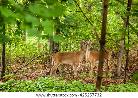 White-tailed deer stand in the woods together.