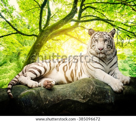 white tiger with tree background - stock photo