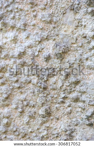 white tree bark texture pattern for background. - stock photo