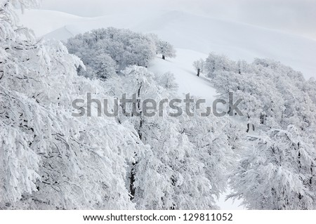 White trees in Carpathian mountains in winter - stock photo