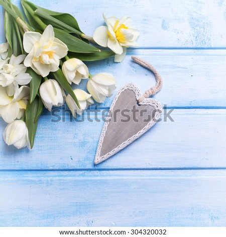 White tulips and narcissus flowers  and decorative heart on blue  wooden background. Selective focus. Place for text. Square image.  - stock photo