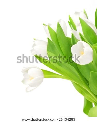 White Tulips Border - stock photo