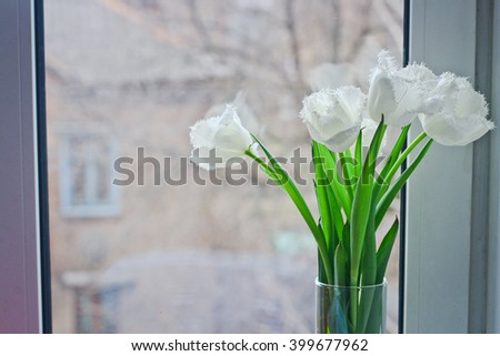 white tulips in a glass vase on the windowsill