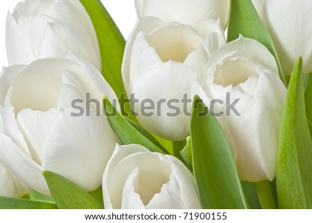 white tulips in detail