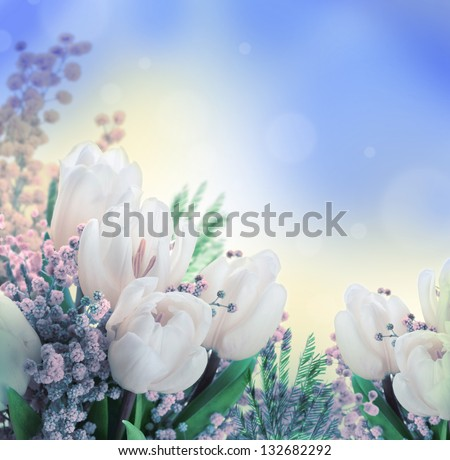 White tulips with a mimosa, a background from flowers - stock photo